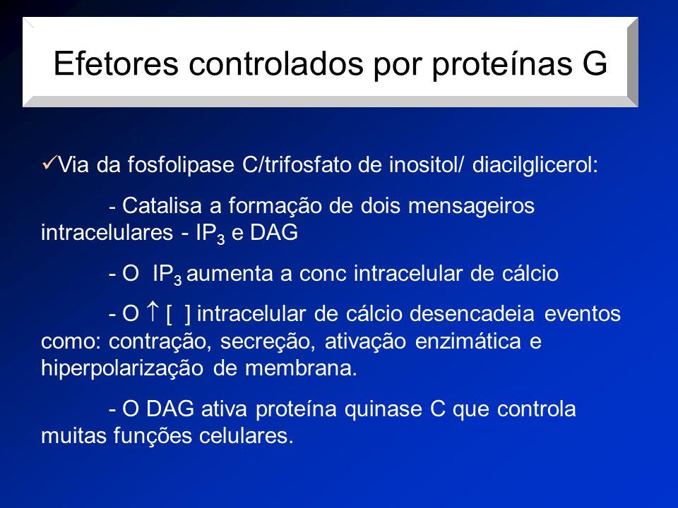 Efetores controlados por proteínas G Via da fosfolipase C/trifosfato de inositol/ diacilglicerol: - Catalisa a formação de dois mensageiros intracelul