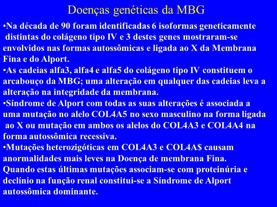Doenças genéticas da MBG Na década de 90 foram identificadas 6 isoformas geneticamente distintas do colágeno tipo IV e 3 destes genes mostraram-se envolvidos nas formas autossômicas e ligada ao X da Membrana Fina e do Alport.