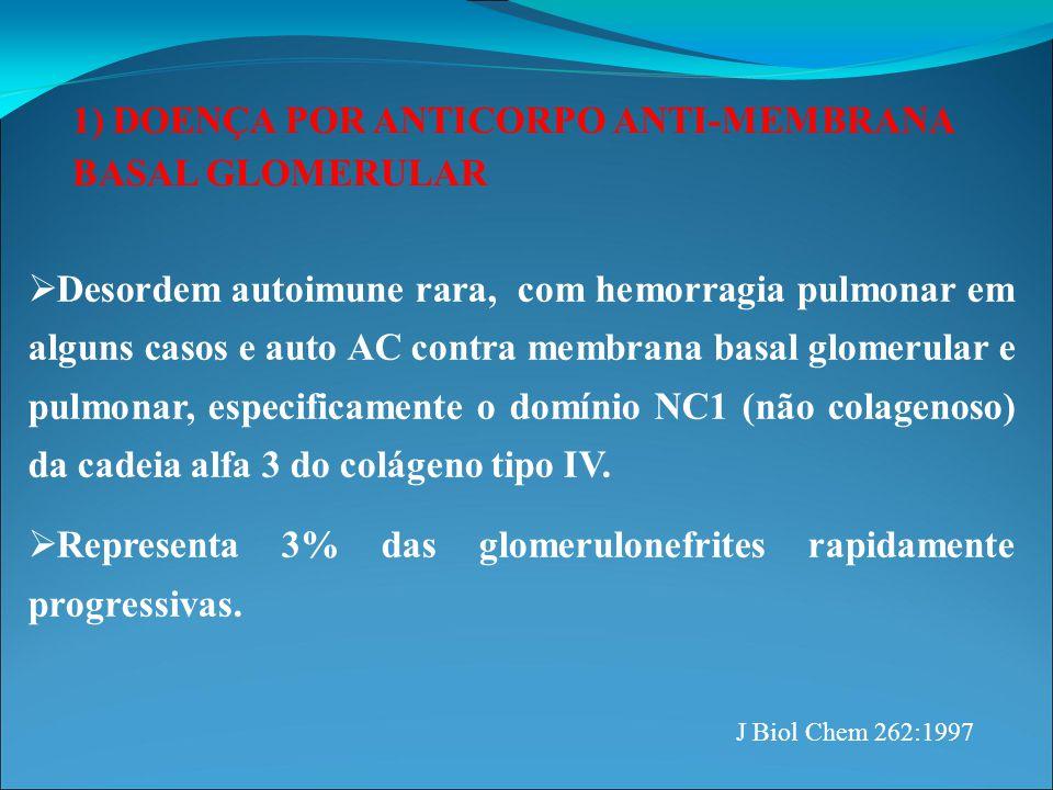 1) DOENÇA POR ANTICORPO ANTI-MEMBRANA BASAL GLOMERULAR  PATOGÊNESE