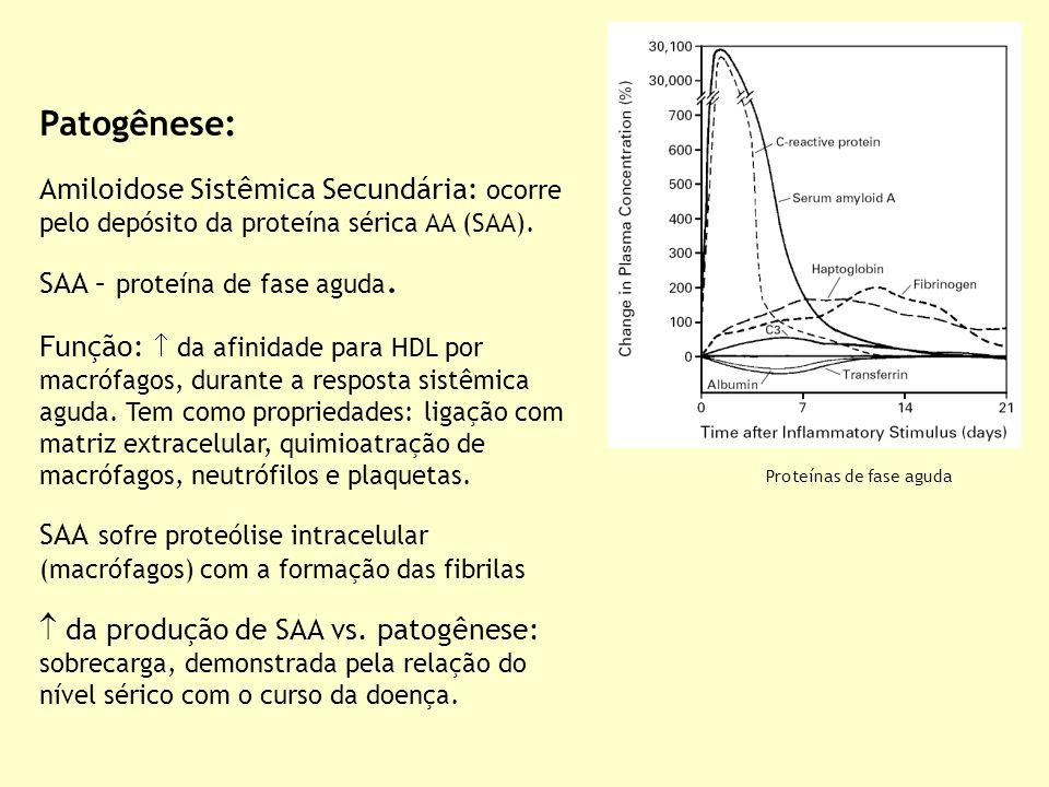 Patogênese: Amiloidose Sistêmica Secundária: ocorre pelo depósito da proteína sérica AA (SAA). SAA – proteína de fase aguda. Função:  da afinidade pa