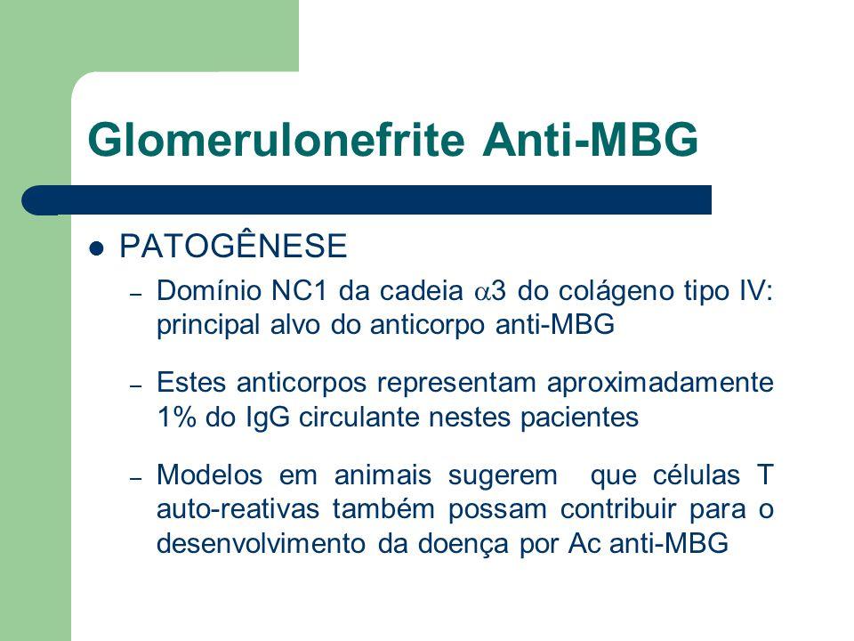 Glomerulonefrite Anti-MBG PATOGÊNESE – Domínio NC1 da cadeia  3 do colágeno tipo IV: principal alvo do anticorpo anti-MBG – Estes anticorpos represen