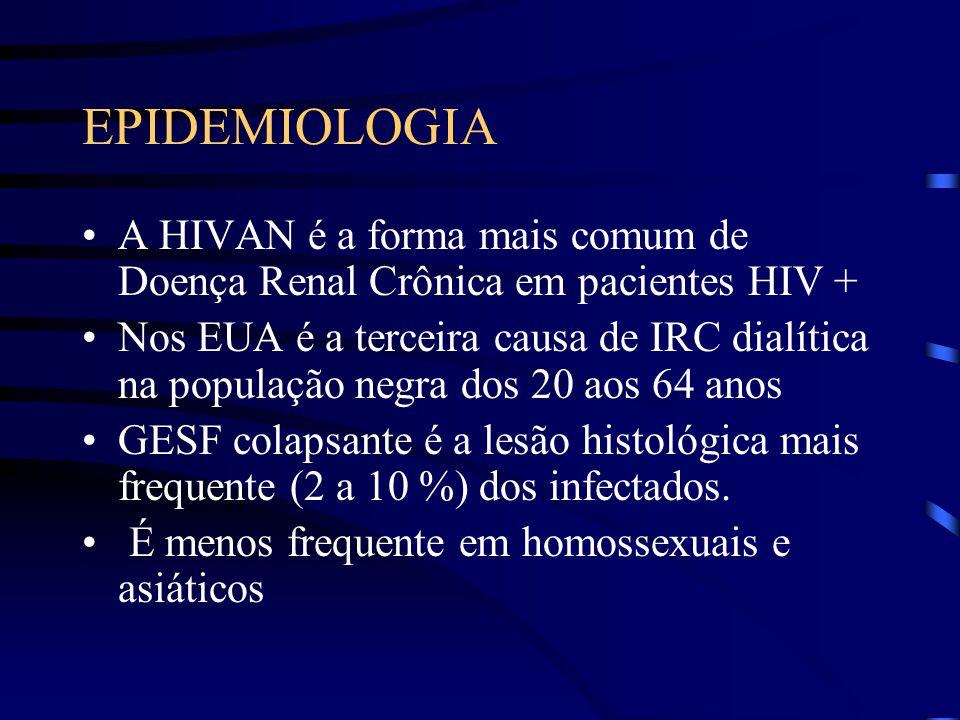 EPIDEMIOLOGIA A HIVAN é a forma mais comum de Doença Renal Crônica em pacientes HIV + Nos EUA é a terceira causa de IRC dialítica na população negra d