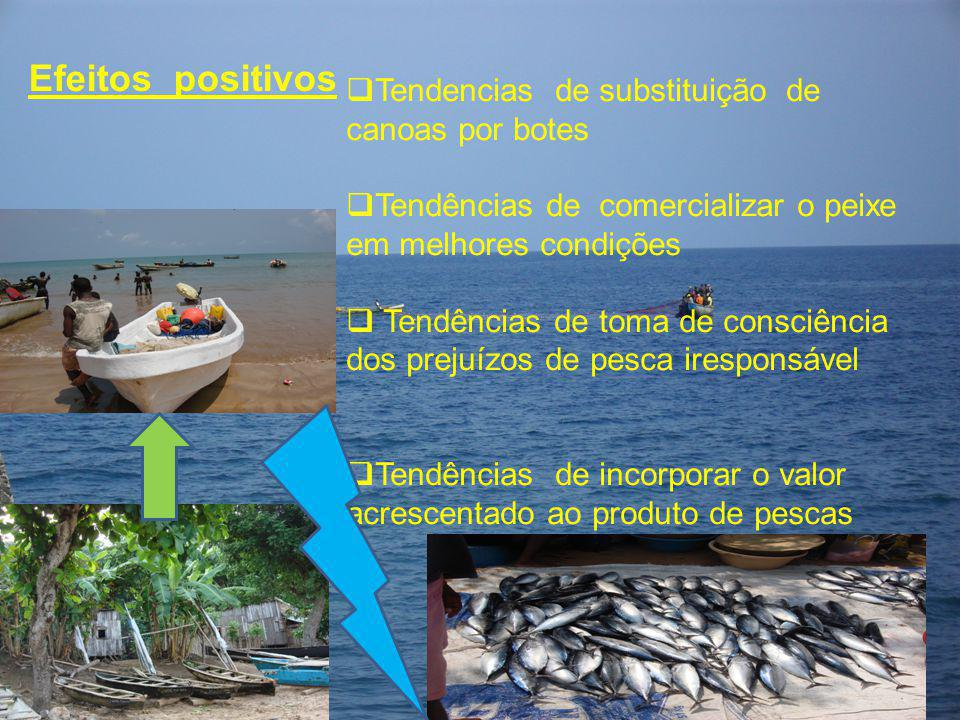 Efeitos positivos  Tendencias de substituição de canoas por botes  Tendências de comercializar o peixe em melhores condições  Tendências de toma de