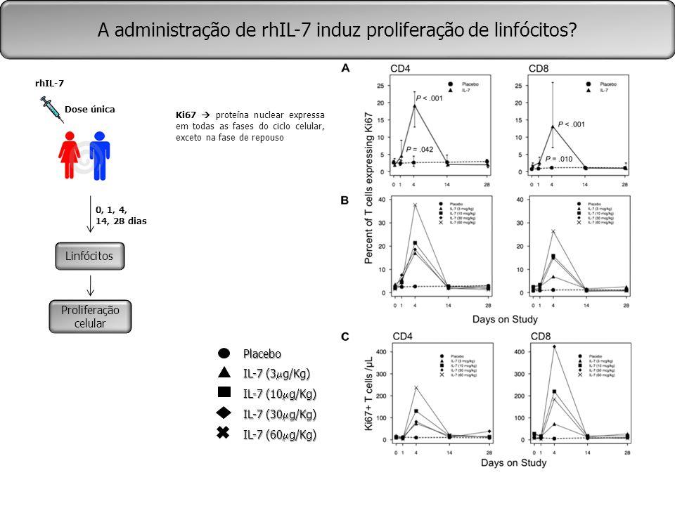 Placebo IL-7 (3  g/Kg) IL-7 (10  g/Kg) IL-7 (30  g/Kg) IL-7 (60  g/Kg) A administração de rhIL-7 induz proliferação de linfócitos? Linfócitos Prol