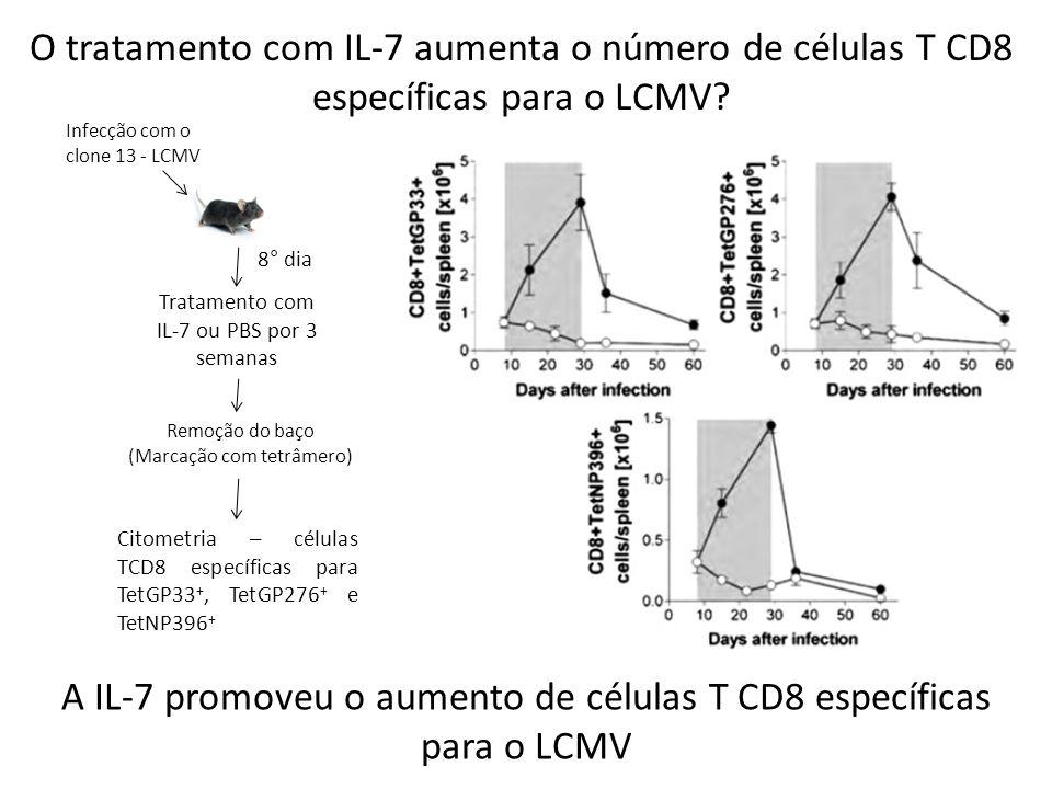 O tratamento com IL-7 aumenta o número de células T CD8 específicas para o LCMV? Infecção com o clone 13 - LCMV 8° dia Tratamento com IL-7 ou PBS por