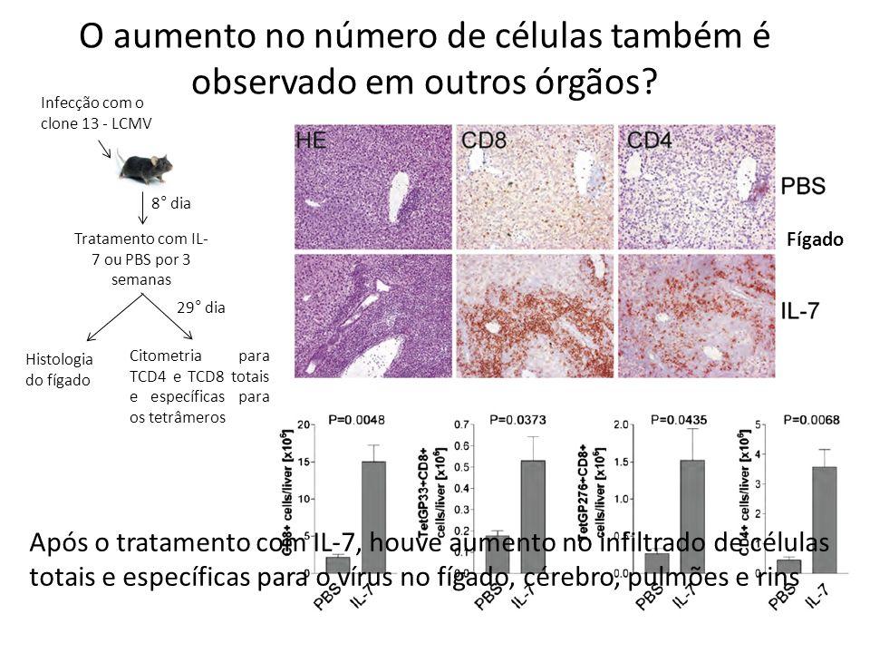 O aumento no número de células também é observado em outros órgãos? Infecção com o clone 13 - LCMV 8° dia Tratamento com IL- 7 ou PBS por 3 semanas Hi