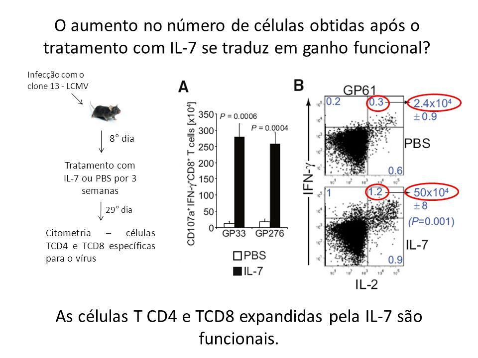 O aumento no número de células obtidas após o tratamento com IL-7 se traduz em ganho funcional? Infecção com o clone 13 - LCMV 8° dia Tratamento com I