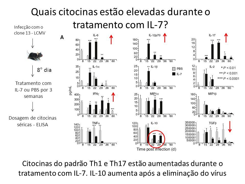 Quais citocinas estão elevadas durante o tratamento com IL-7? Infecção com o clone 13 - LCMV 8° dia Tratamento com IL-7 ou PBS por 3 semanas Dosagem d