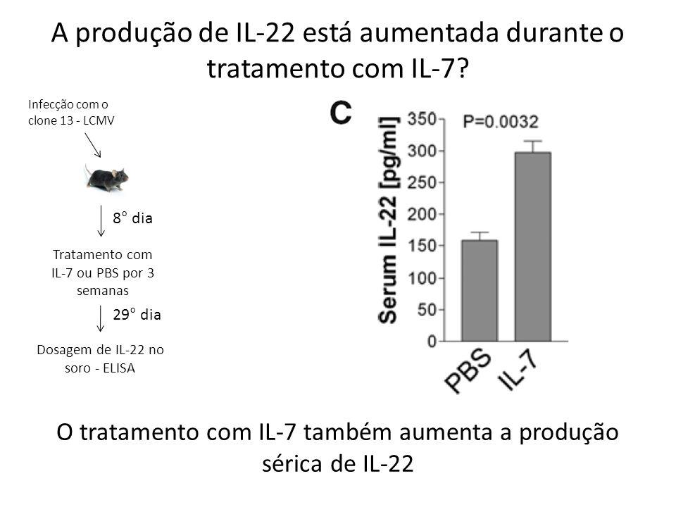A produção de IL-22 está aumentada durante o tratamento com IL-7? Infecção com o clone 13 - LCMV 8° dia Tratamento com IL-7 ou PBS por 3 semanas Dosag