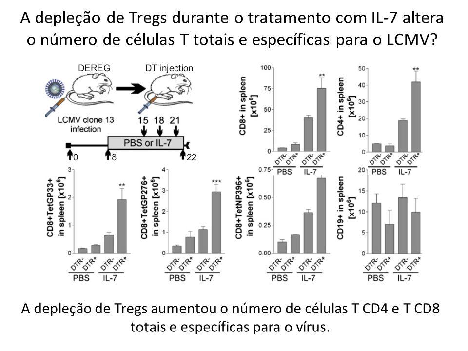 A depleção de Tregs durante o tratamento com IL-7 altera o número de células T totais e específicas para o LCMV? A depleção de Tregs aumentou o número