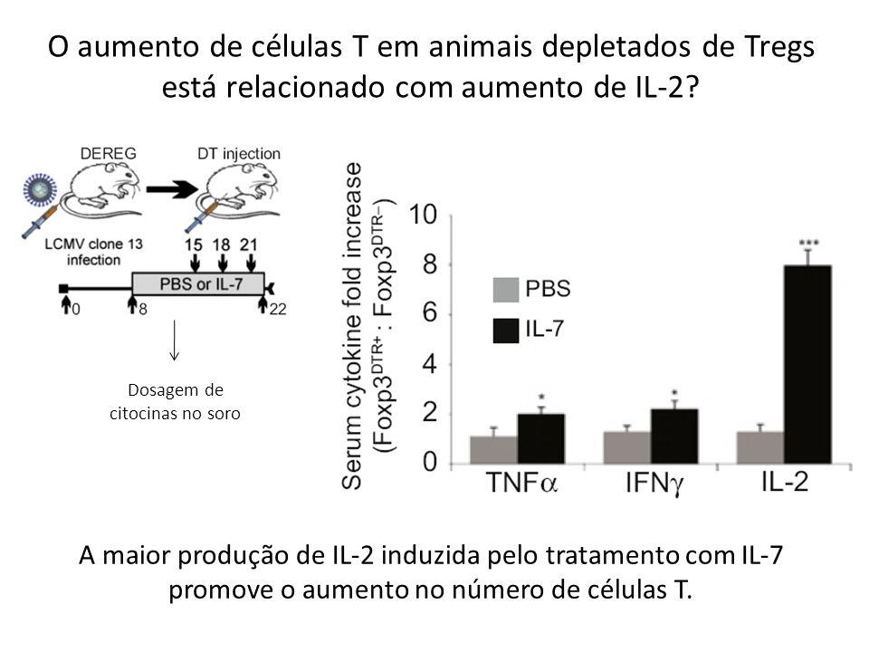 O aumento de células T em animais depletados de Tregs está relacionado com aumento de IL-2? Dosagem de citocinas no soro A maior produção de IL-2 indu