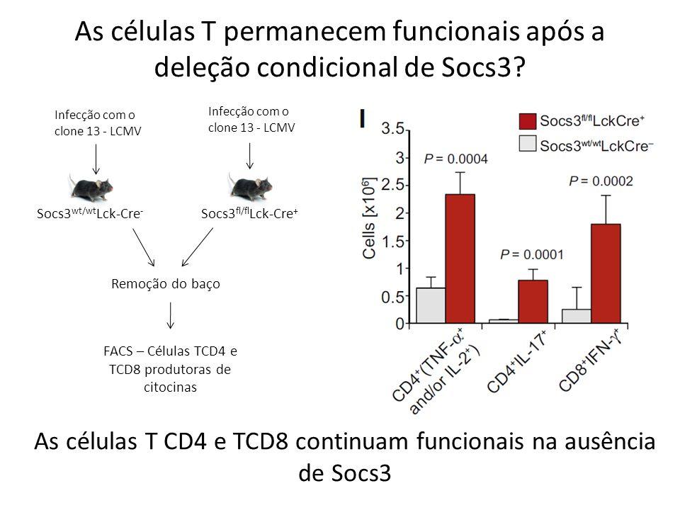 As células T permanecem funcionais após a deleção condicional de Socs3? Infecção com o clone 13 - LCMV Remoção do baço Socs3 wt/wt Lck-Cre - Socs3 fl/
