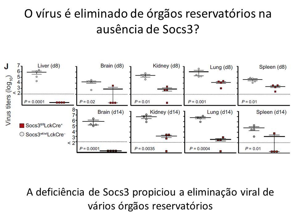 O vírus é eliminado de órgãos reservatórios na ausência de Socs3? A deficiência de Socs3 propiciou a eliminação viral de vários órgãos reservatórios