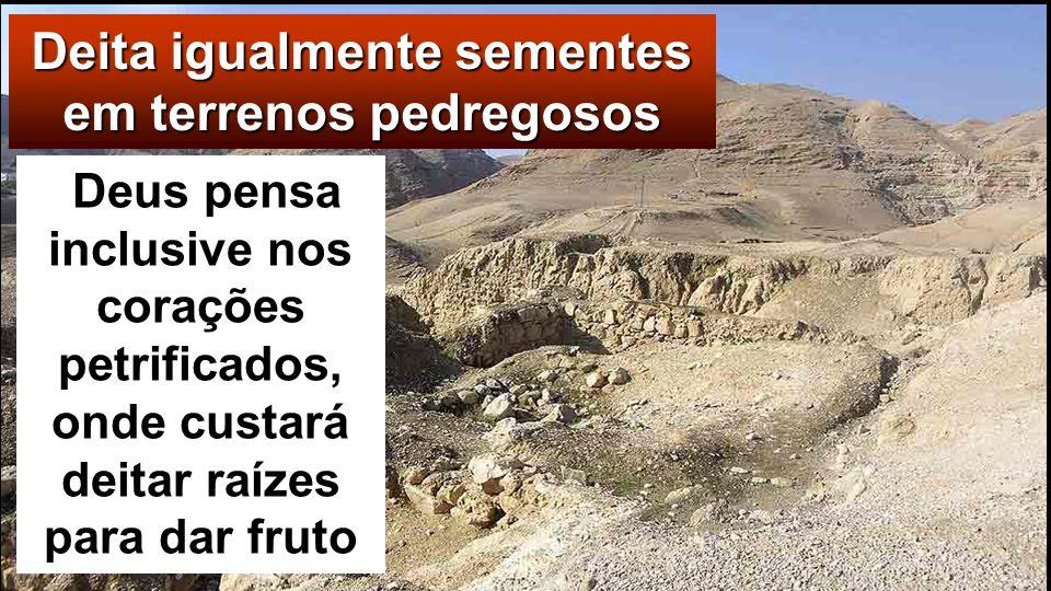 Outras cairam em sítios pedrego- sos, onde não havia muita terra, e logo nasceram porque a terra era pouco profunda; mas, depois de nascer o sol, quei