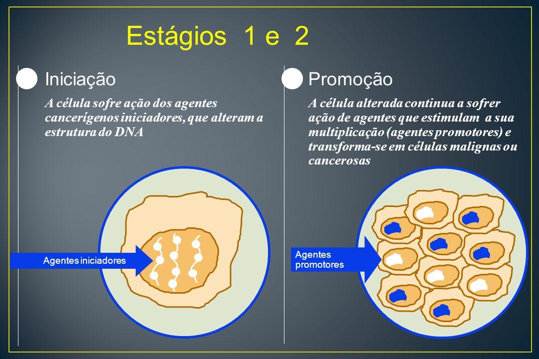 Estágios 1 e 2 12 Agentes iniciadores Iniciação A célula sofre ação dos agentes cancerígenos iniciadores, que alteram a estrutura do DNA Promoção A cé