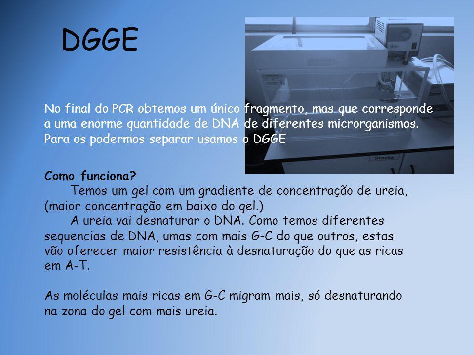 DGGE No final do PCR obtemos um único fragmento, mas que corresponde a uma enorme quantidade de DNA de diferentes microrganismos.