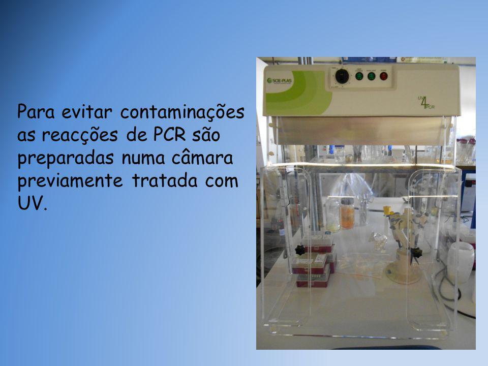 Para evitar contaminações as reacções de PCR são preparadas numa câmara previamente tratada com UV.