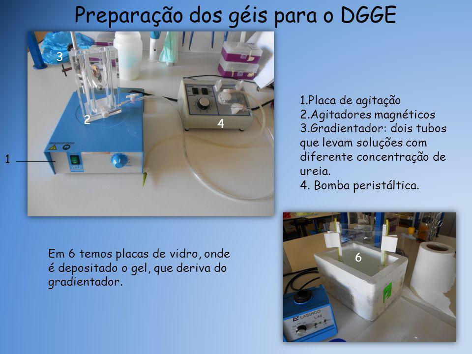 Preparação dos géis para o DGGE 1.Placa de agitação 2.Agitadores magnéticos 3.Gradientador: dois tubos que levam soluções com diferente concentração de ureia.