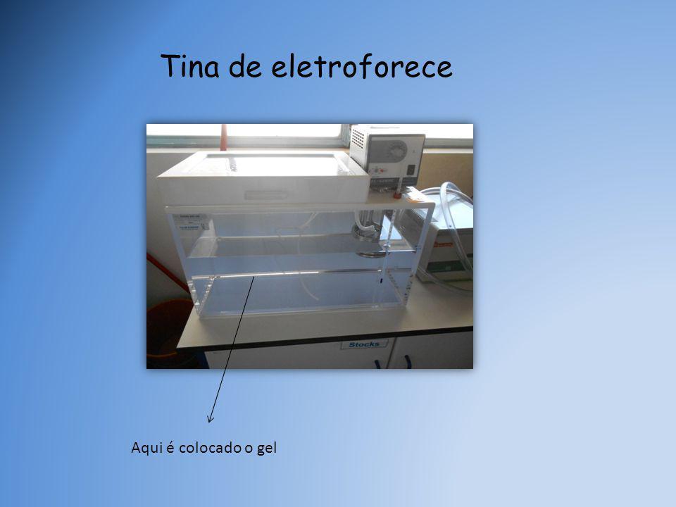 Tina de eletroforece Aqui é colocado o gel
