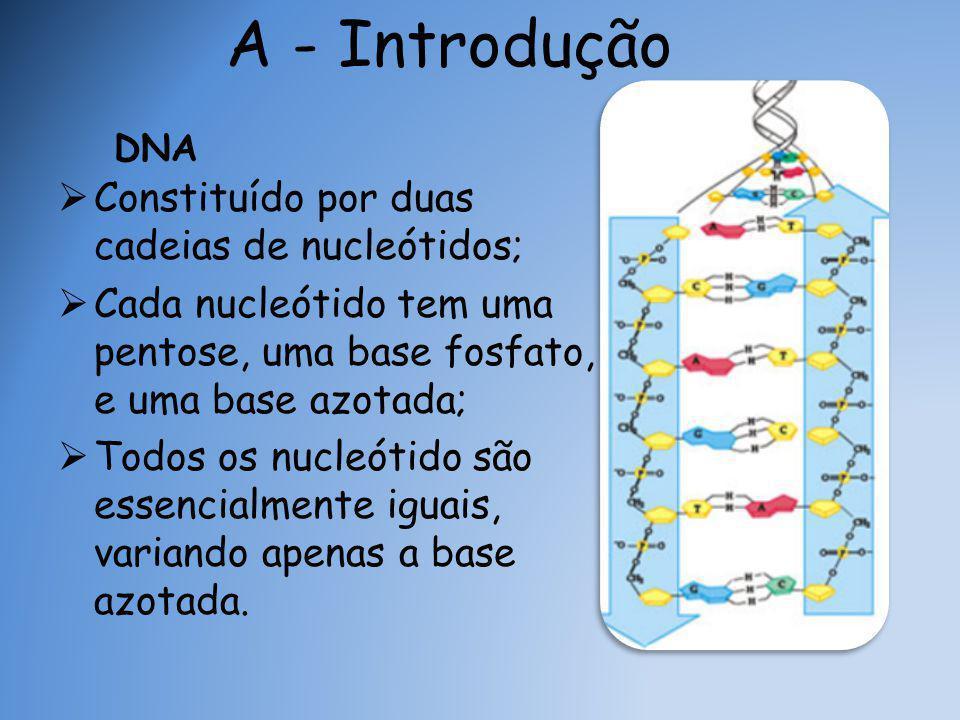 DNA  Constituído por duas cadeias de nucleótidos;  Cada nucleótido tem uma pentose, uma base fosfato, e uma base azotada;  Todos os nucleótido são essencialmente iguais, variando apenas a base azotada.