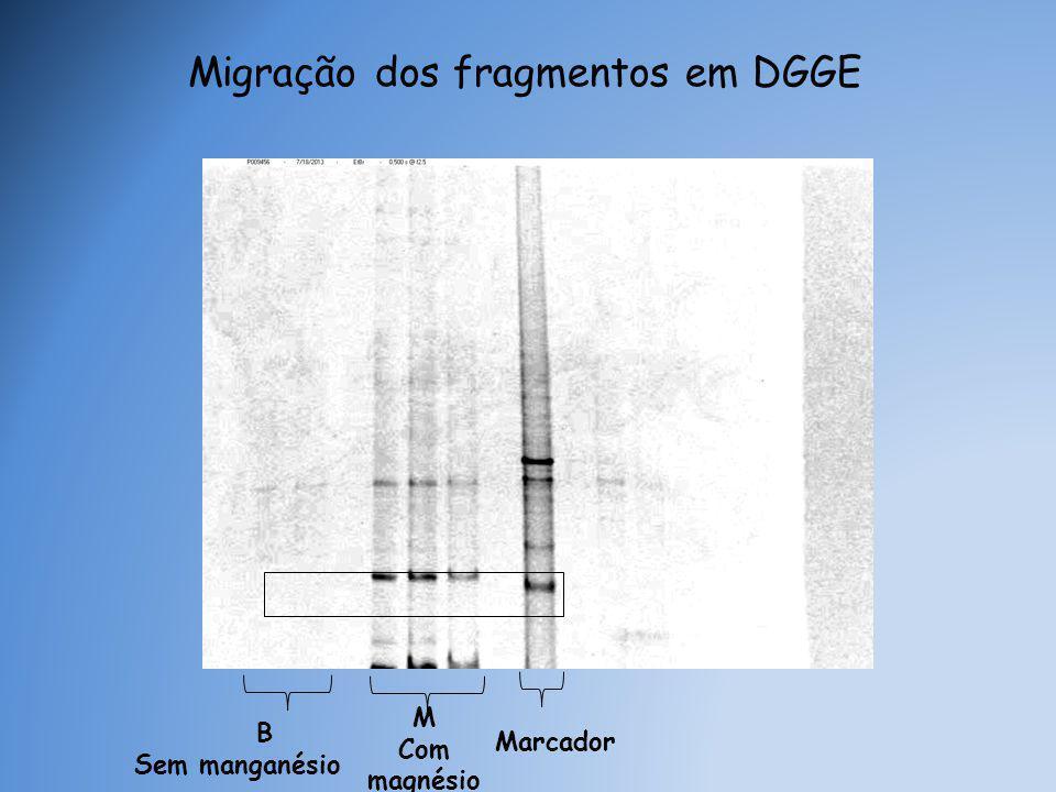 Marcador B Sem manganésio Migração dos fragmentos em DGGE M Com magnésio