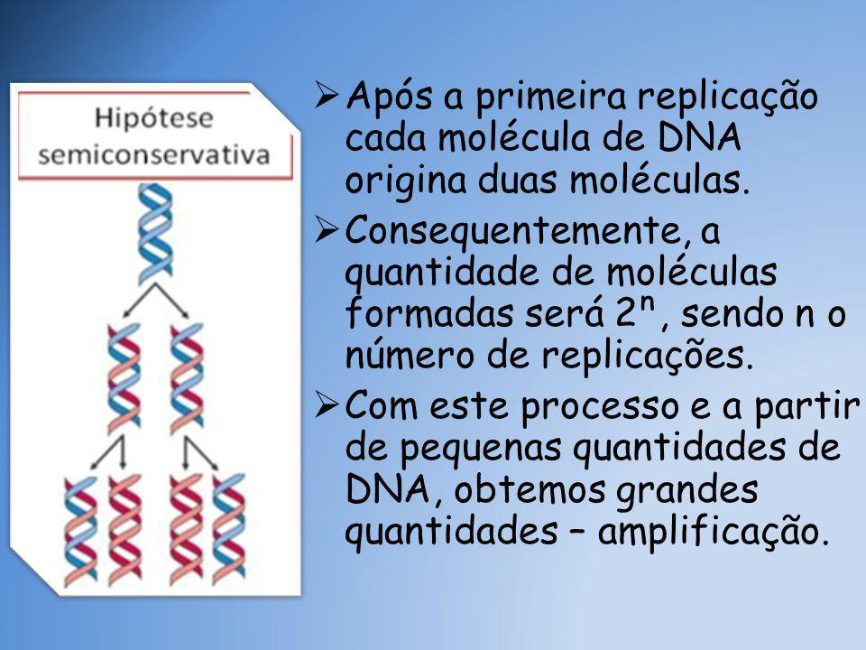 Após a primeira replicação cada molécula de DNA origina duas moléculas.