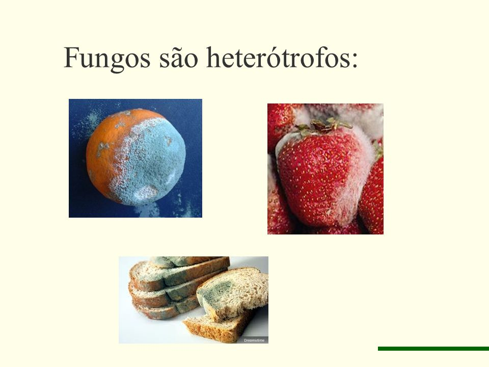 Fungos são heterótrofos: