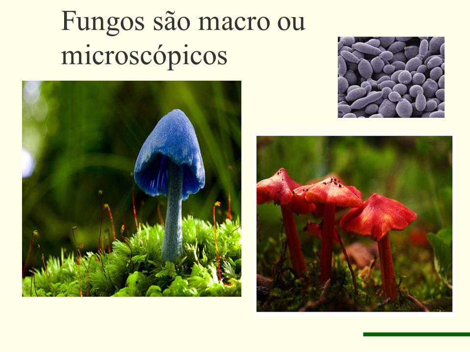 Fungos são macro ou microscópicos