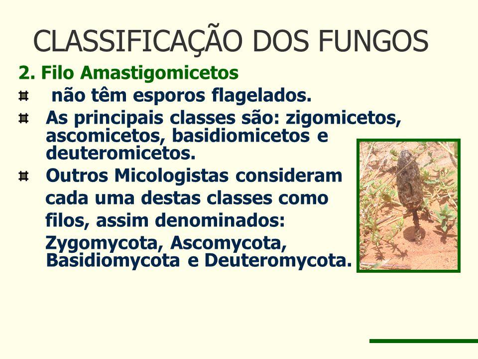 CLASSIFICAÇÃO DOS FUNGOS 2. Filo Amastigomicetos não têm esporos flagelados. As principais classes são: zigomicetos, ascomicetos, basidiomicetos e deu