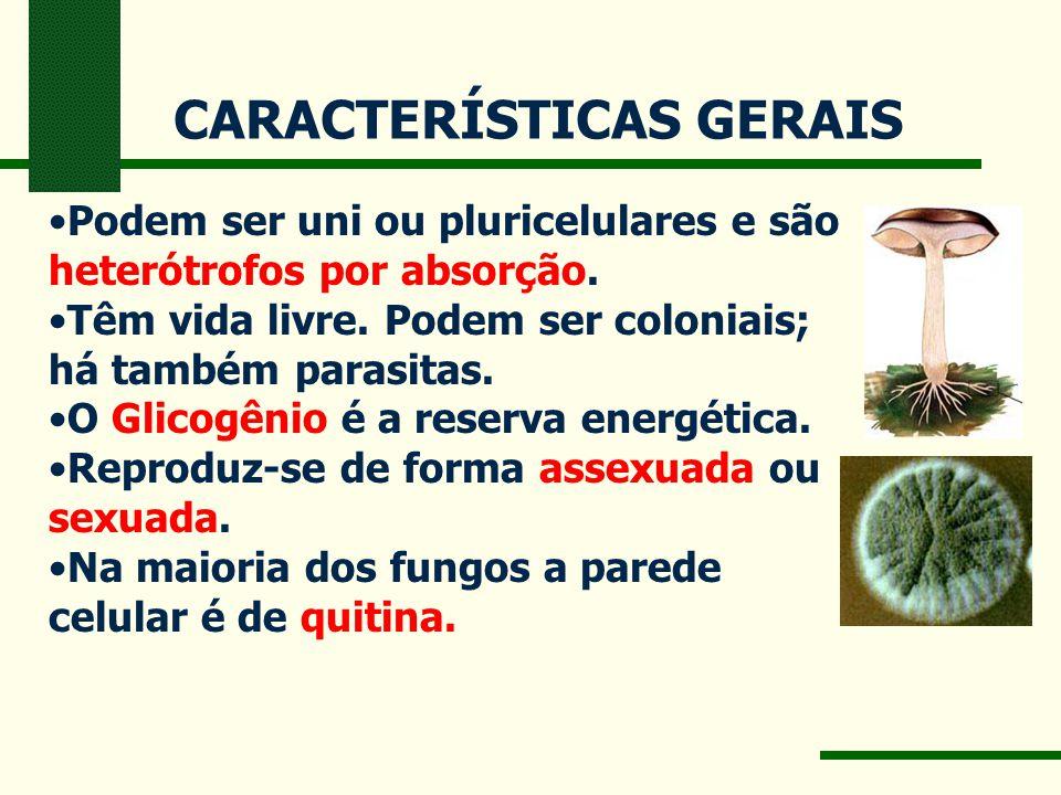 CARACTERÍSTICAS GERAIS Podem ser uni ou pluricelulares e são heterótrofos por absorção. Têm vida livre. Podem ser coloniais; há também parasitas. O Gl