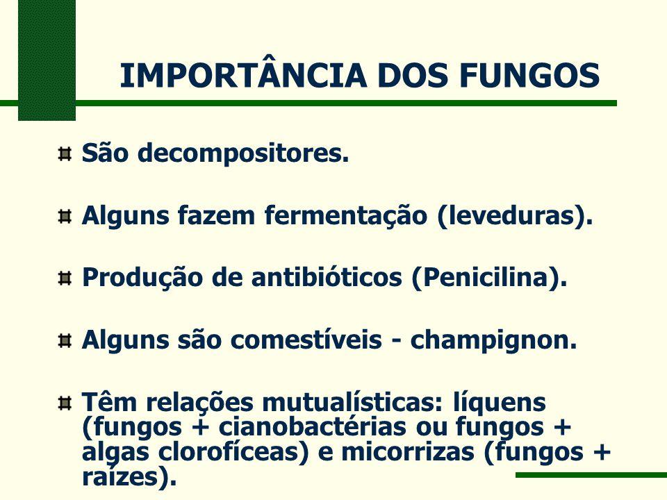 IMPORTÂNCIA DOS FUNGOS São decompositores. Alguns fazem fermentação (leveduras). Produção de antibióticos (Penicilina). Alguns são comestíveis - champ