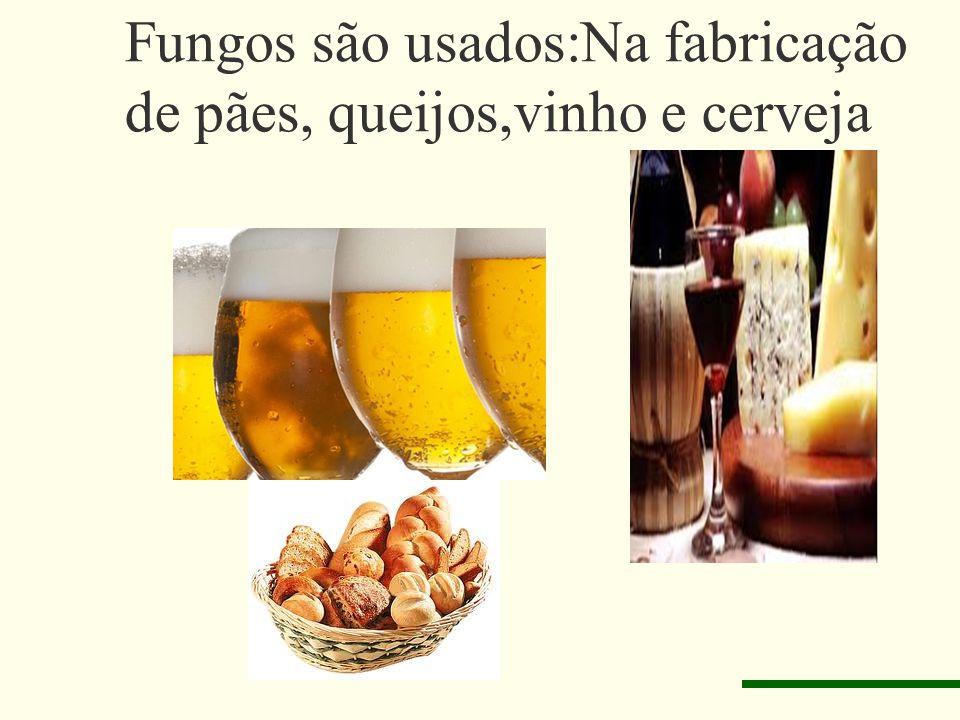 Fungos são usados:Na fabricação de pães, queijos,vinho e cerveja