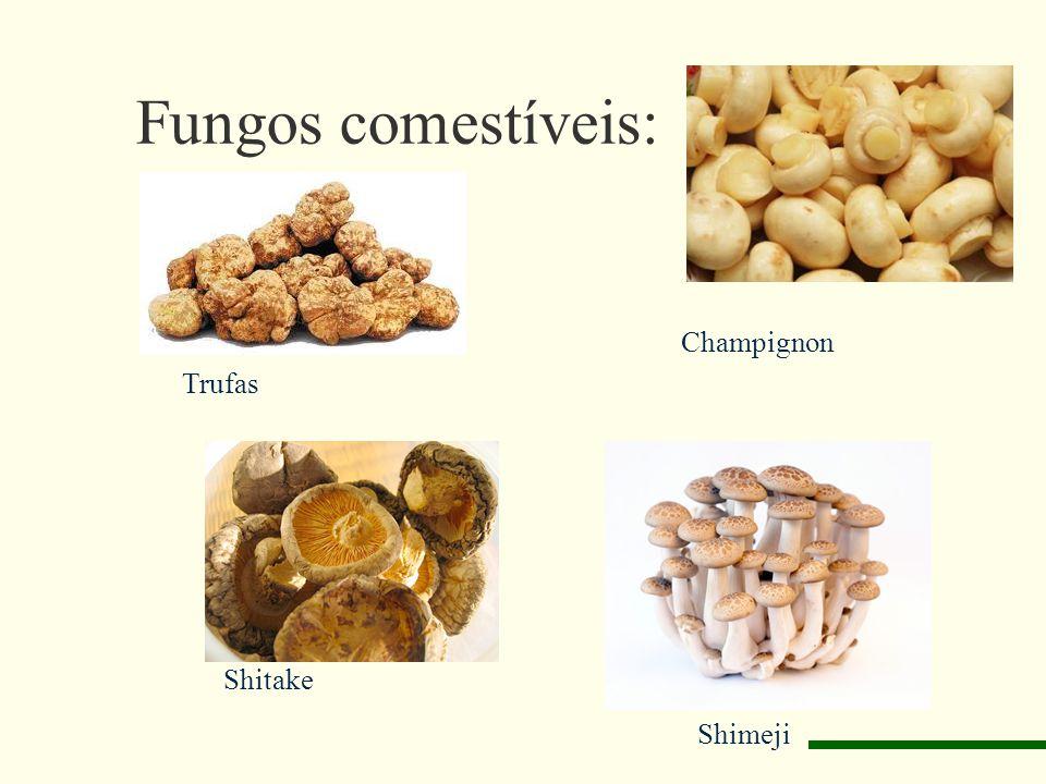 Fungos comestíveis: Trufas Champignon Shitake Shimeji