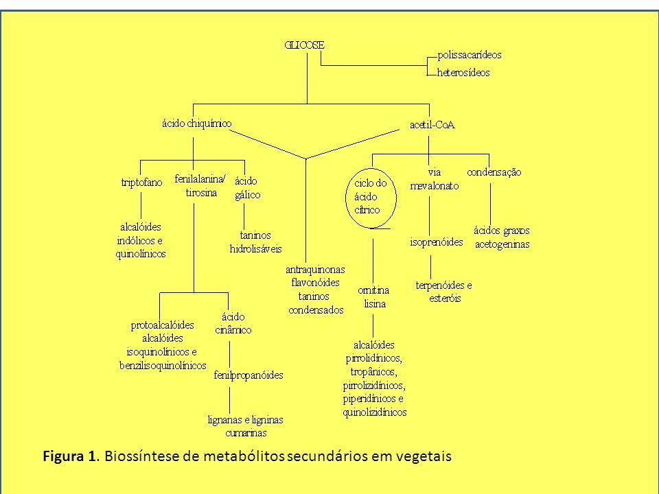 Figura 1. Biossíntese de metabólitos secundários em vegetais