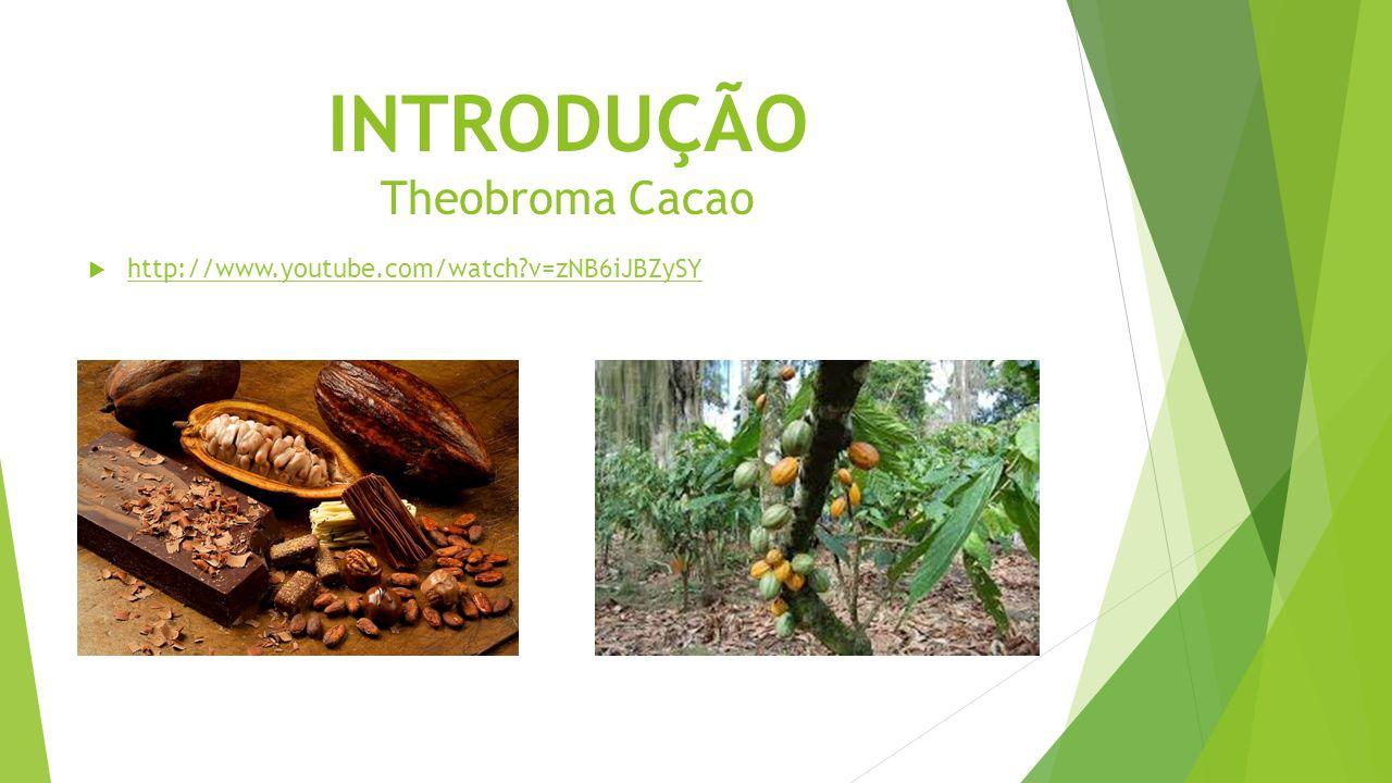 INTRODUÇÃO Theobroma Cacao  http://www.youtube.com/watch?v=zNB6iJBZySY http://www.youtube.com/watch?v=zNB6iJBZySY