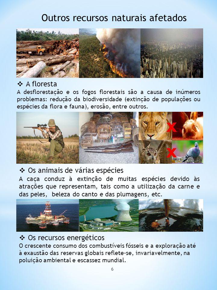 6 Outros recursos naturais afetados  A floresta A desflorestação e os fogos florestais são a causa de inúmeros problemas: redução da biodiversidade (