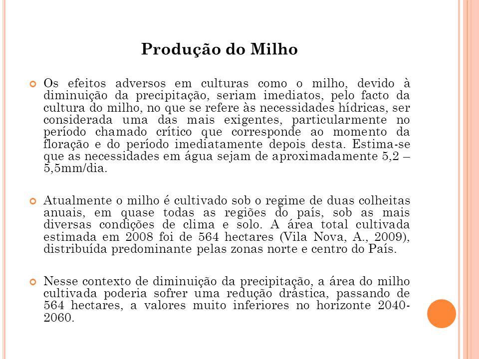 Produção do Milho Os efeitos adversos em culturas como o milho, devido à diminuição da precipitação, seriam imediatos, pelo facto da cultura do milho,