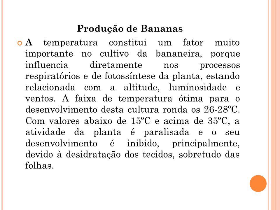 Produção de Bananas A temperatura constitui um fator muito importante no cultivo da bananeira, porque influencia diretamente nos processos respiratóri