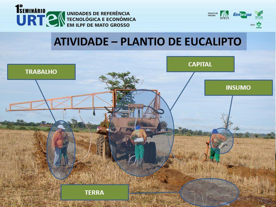 TRABALHO CAPITAL TERRA INSUMO ATIVIDADE – PLANTIO DE EUCALIPTO
