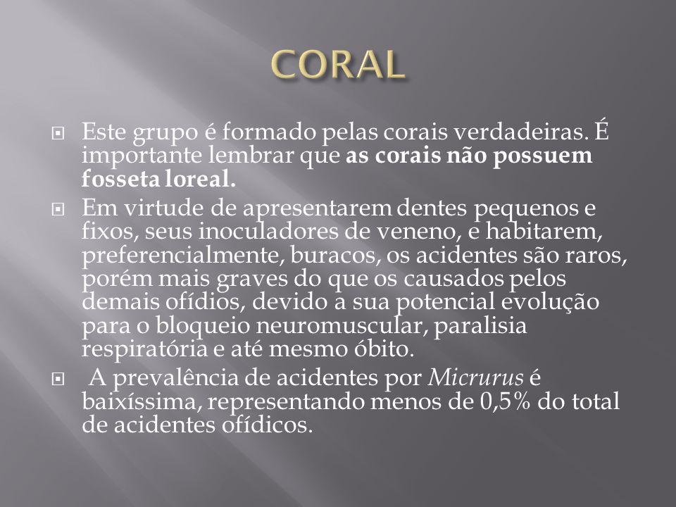  Este grupo é formado pelas corais verdadeiras. É importante lembrar que as corais não possuem fosseta loreal.  Em virtude de apresentarem dentes pe