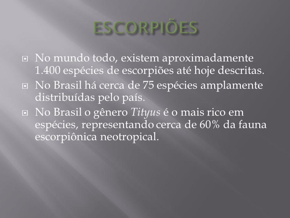 As principais espécies são:  Tityus serrulatus, responsável por acidentes de maior gravidade,  Tityus bahiensis e  Tityus stigmurus.