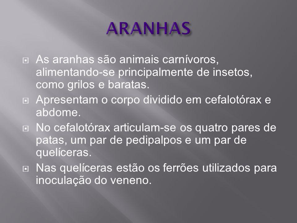  No Brasil: Phoneutria, Loxosceles e Latrodectus.PhoneutriaLoxosceles Latrodectus  Os acidentes causados por Lycosa (aranha- de-grama), bastante freqüentes e pelas caranguejeiras, muito temidas, são destituídos de maior importância.Lycosa caranguejeiras