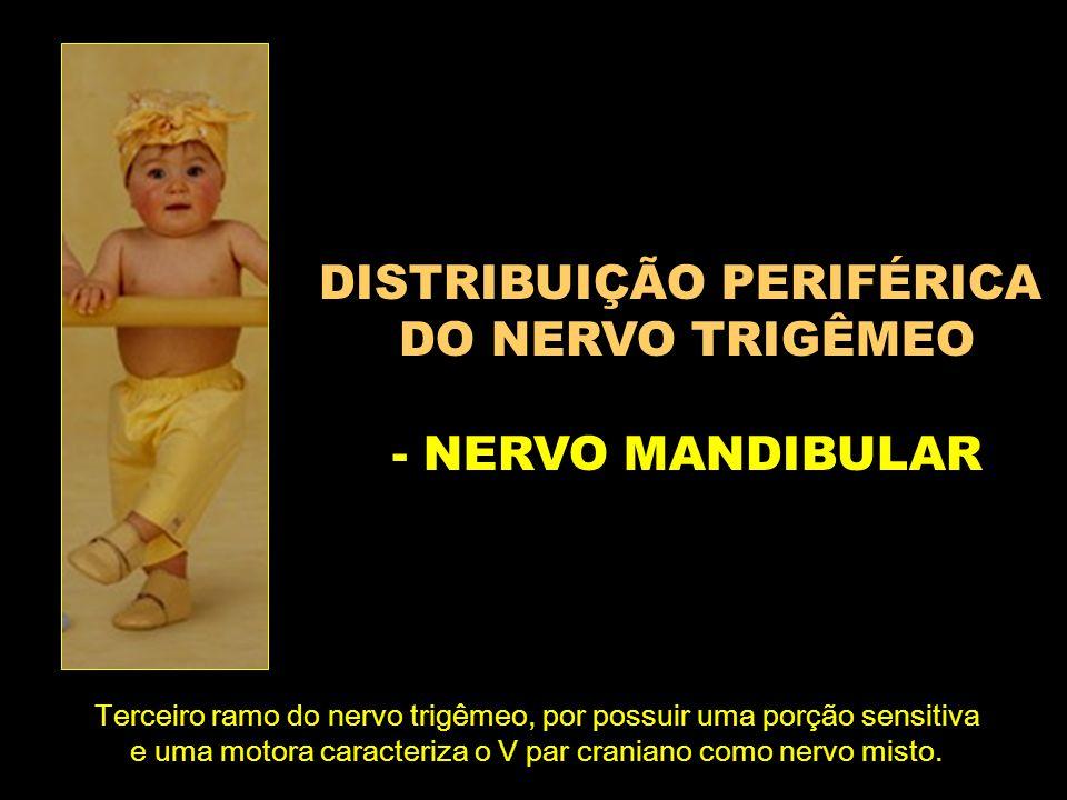DISTRIBUIÇÃO PERIFÉRICA DO NERVO TRIGÊMEO - NERVO MANDIBULAR Terceiro ramo do nervo trigêmeo, por possuir uma porção sensitiva e uma motora caracteriz