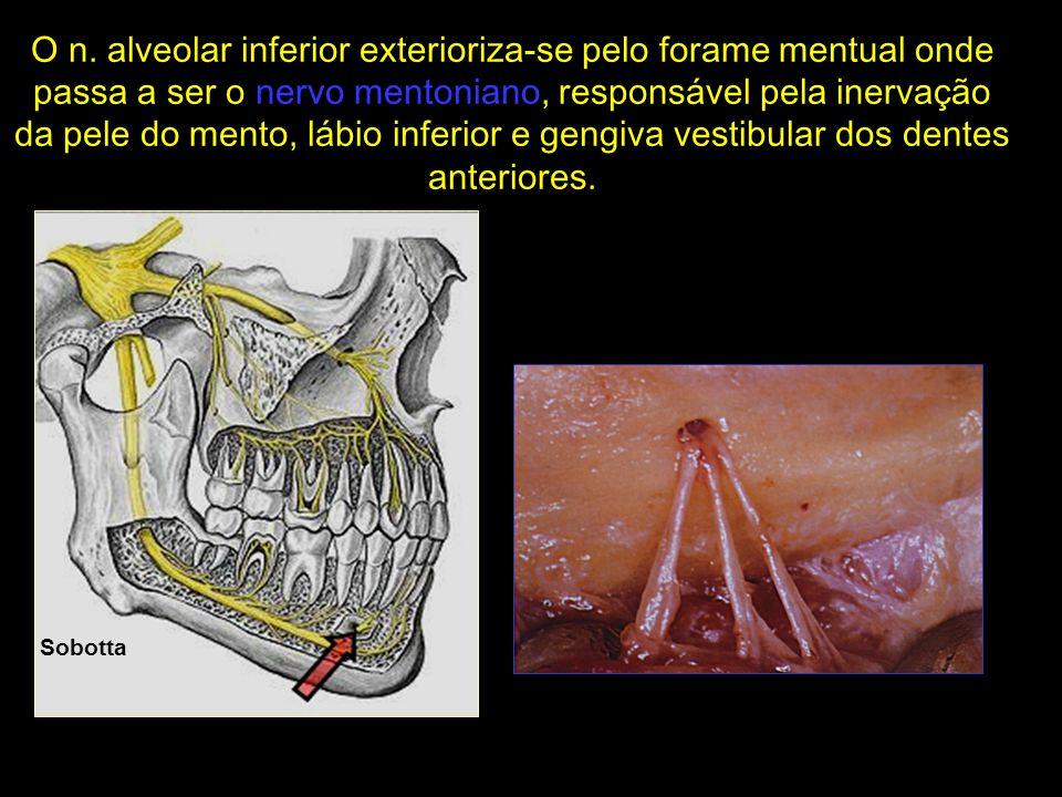 Sobotta O n. alveolar inferior exterioriza-se pelo forame mentual onde passa a ser o nervo mentoniano, responsável pela inervação da pele do mento, lá