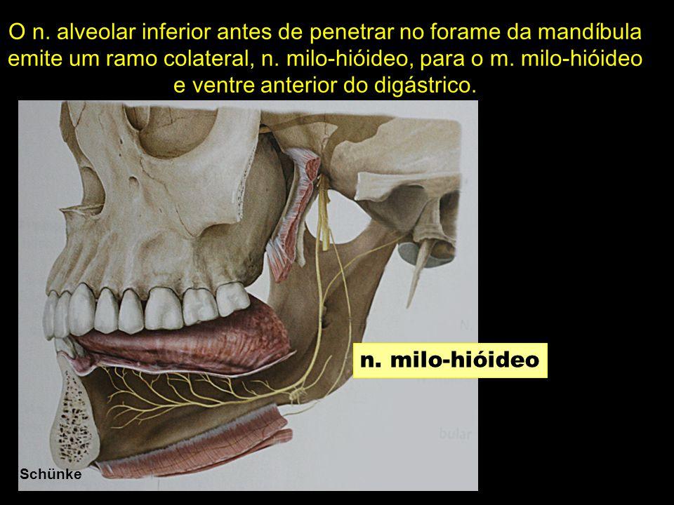 Schünke n. milo-hióideo O n. alveolar inferior antes de penetrar no forame da mandíbula emite um ramo colateral, n. milo-hióideo, para o m. milo-hióid