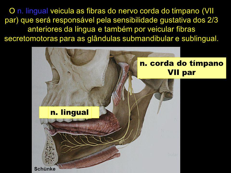 Schünke n. corda do tímpano VII par n. lingual O n. lingual veicula as fibras do nervo corda do tímpano (VII par) que será responsável pela sensibilid