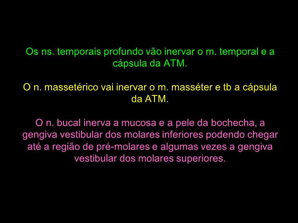 Os ns. temporais profundo vão inervar o m. temporal e a cápsula da ATM. O n. massetérico vai inervar o m. masséter e tb a cápsula da ATM. O n. bucal i