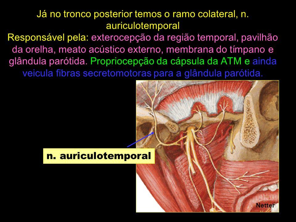 n. auriculotemporal Netter Já no tronco posterior temos o ramo colateral, n. auriculotemporal Responsável pela: exterocepção da região temporal, pavil