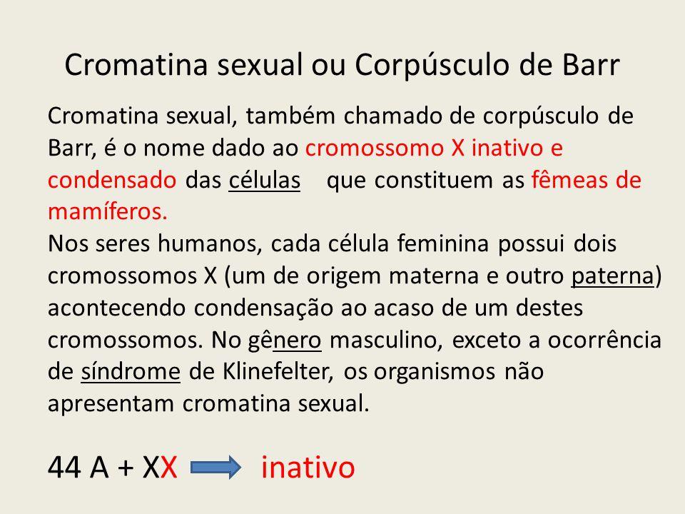 Cromatina sexual, também chamado de corpúsculo de Barr, é o nome dado ao cromossomo X inativo e condensado das células que constituem as fêmeas de mam