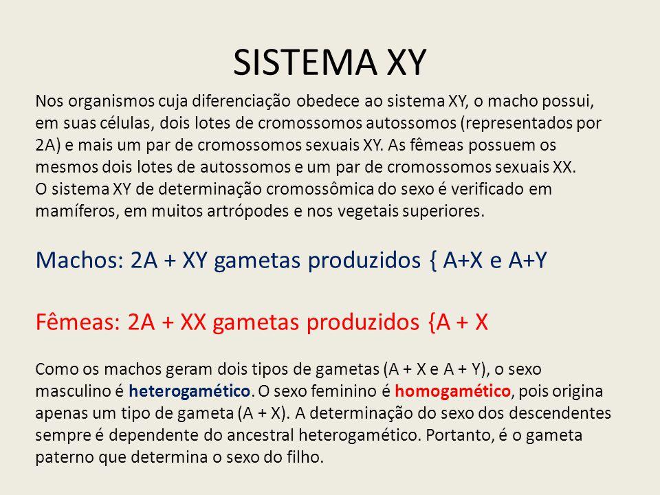 SISTEMA XY Nos organismos cuja diferenciação obedece ao sistema XY, o macho possui, em suas células, dois lotes de cromossomos autossomos (representad